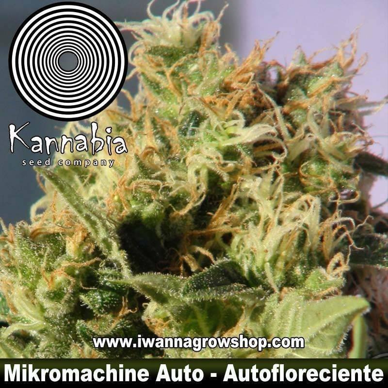 MIKROMACHINE AUTO de KANNABIA – semilla autofloreciente