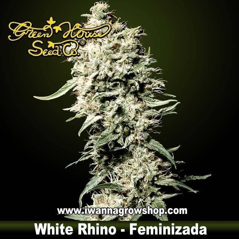 White Rhino Feminizada - Green House - 3, 5, y 10 u.