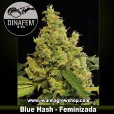 Blue Hash – Feminizada – Dinafem Seeds