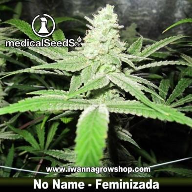 No Name – Feminizada