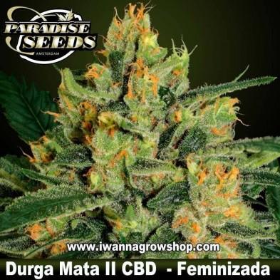 Durga Mata II CBD – Feminizada – Paradise Seeds