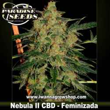 Nebula II CBD – Feminizada – Paradise Seeds