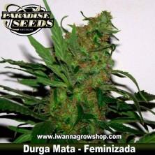 DURGA MATA de PARADISE SEEDS | Feminizada | Indica