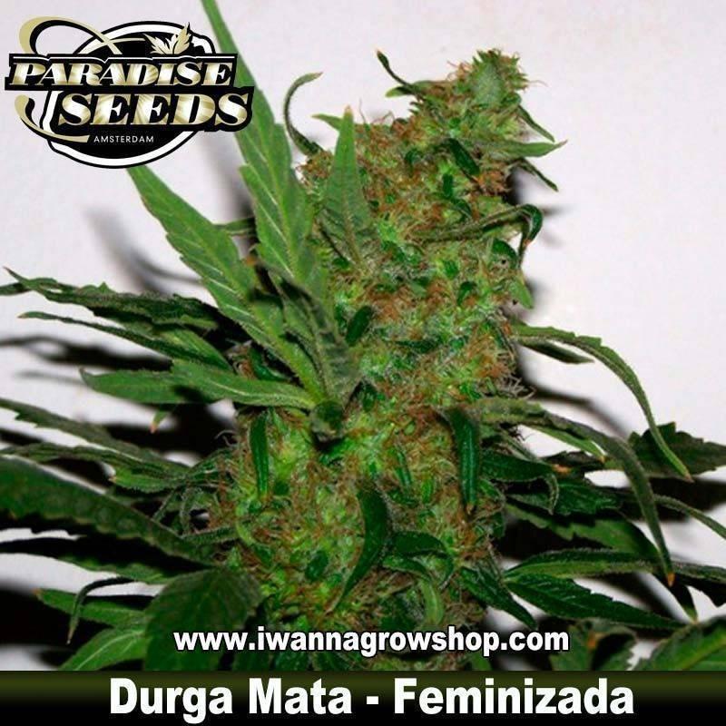 DURGA MATA de PARADISE SEEDS – semilla feminizada (INDICA)