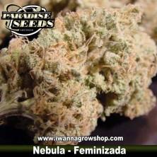 NEBULA de PARADISE SEEDS | Feminizada | Indica-Sativa