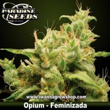 OPIUM de PARADISE SEEDS | Feminizada | Indica-Sativa