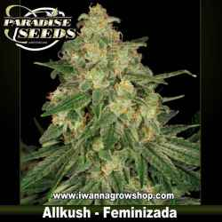 Allkush – Feminizada – Paradise Seeds