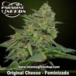 Original Cheese – Feminizada