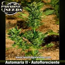 AUTOMARIA II de PARADISE SEEDS | Autofloreciente Indica