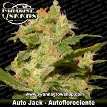 Auto Jack – Autofloreciente