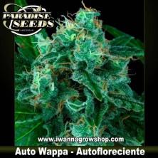 Auto Wappa – Autofloreciente