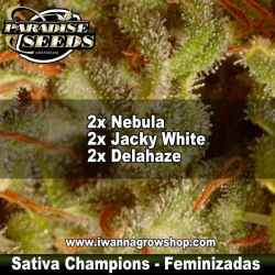 COLLECTION PACK SATIVA CHAMPIONS de PARADISE SEEDS