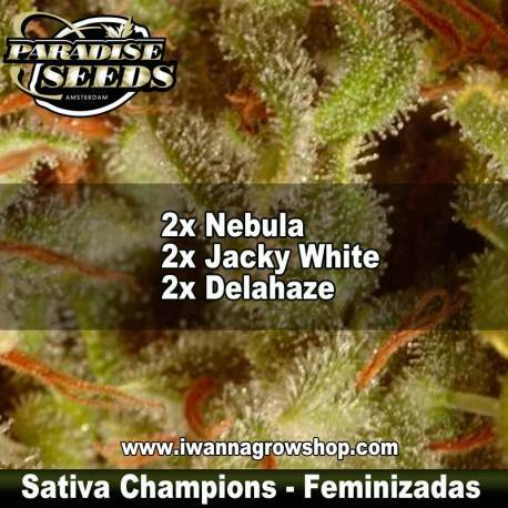COLECTION PACK SATIVA CHAMPIONS