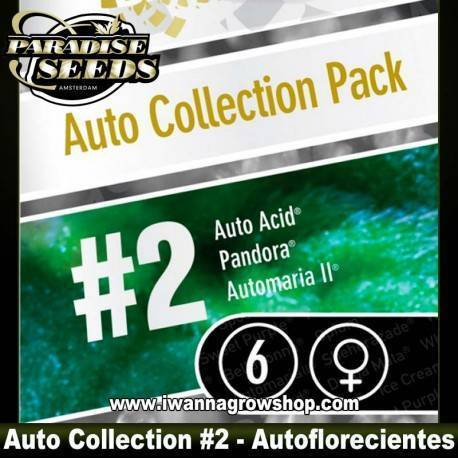 AUTO COLLECTION PACK 2 de PARADISE SEEDS - feminizada (AUTOFLORECIENTE)