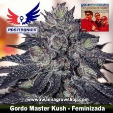 Gordo Master Kush – Feminizada
