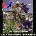 CBD+ Black Widow – Feminizada