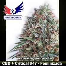 CBD+ Critical 47 – Feminizada
