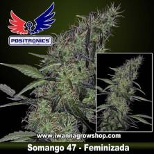 Somango 47 – Feminizada
