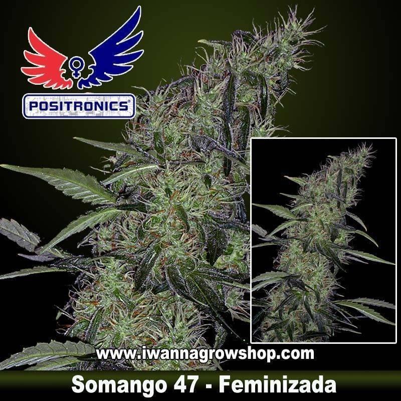 SOMANGO 47