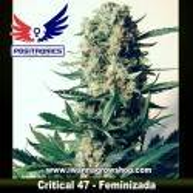 Critical 47 – Feminizada