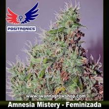 Amnesia Mistery – Feminizada