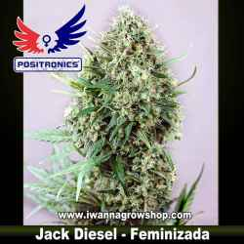 Jack Diesel – Feminizada