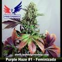Purple Haze 1 – Feminizada