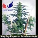 May Day Express – Autofloreciente