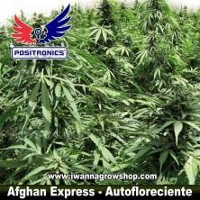 Afghan Express – Autofloreciente