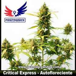 Critical Express – Autofloreciente