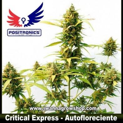 CRITICAL EXPRESS de POSITRONICS | Autofloreciente