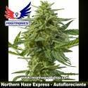 Northern Haze Express – Autofloreciente