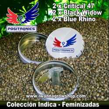 Coleccionista Indica – Feminizadas