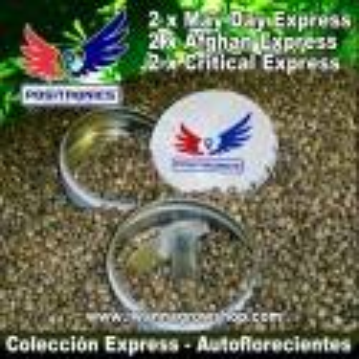 Coleccionista Express – Autoflorecientes