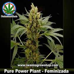 PURE POWER PLANT de PROFESSIONAL SEEDS | Indica-Sativa