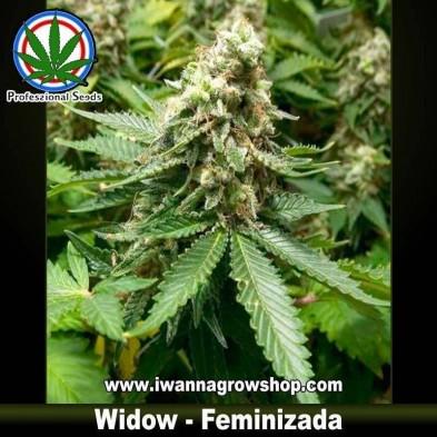 Widow – Feminizada