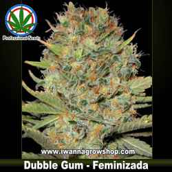 DUBBLE GUM de PROFESSIONAL SEEDS | Indica-Sativa