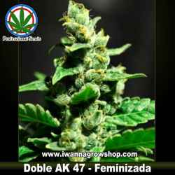 DOBLE AK-47 de PROFESSIONAL SEEDS | Feminizada | Sativa