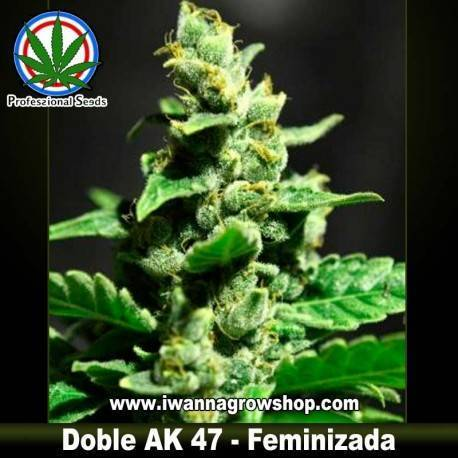 DOBLE AK-47 de PROFESSIONAL SEEDS – feminizada (SATIVA)