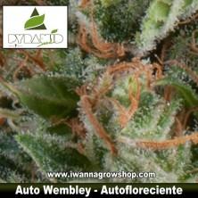 Auto Wembley – Autofloreciente
