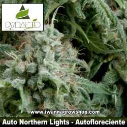 AUTO NORTHERN LIGHTS de PYRAMID SEEDS – (AUTOFLORECIENTE)(INDICA)