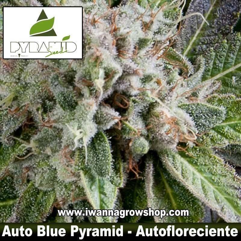 Auto Blue Pyramid