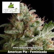American Pie – Feminizada