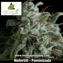 NEFERTITI de PYRAMIDS SEEDS | Feminizada | Sativa