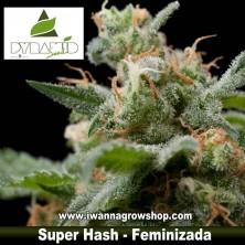 Super Hash – Feminizada