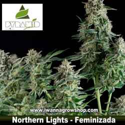 NORTHERN LIGHTS de PYRAMIDS SEEDS | Feminizada | Indica