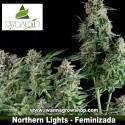 Northern Lights – Feminizada
