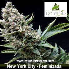 New York City – Feminizada