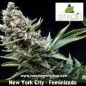 New York City – Feminizada