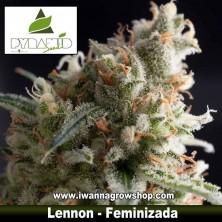 Lennon – Feminizada